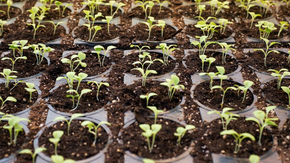 Startups seedlings